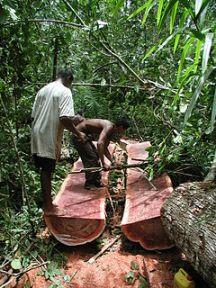 acana240px-Logging_Bulletwood_Berbice-Guyana_JK