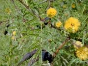 aroma amarilla 2